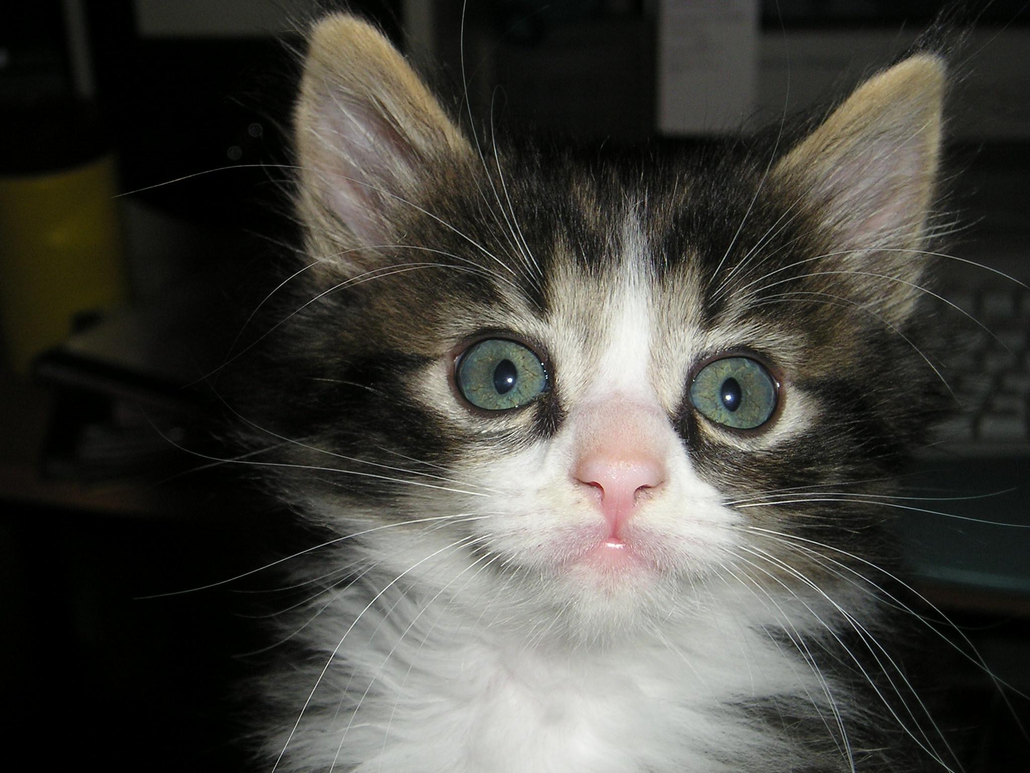 Simon-cat as the cutest kitten freaking ever. 2007.