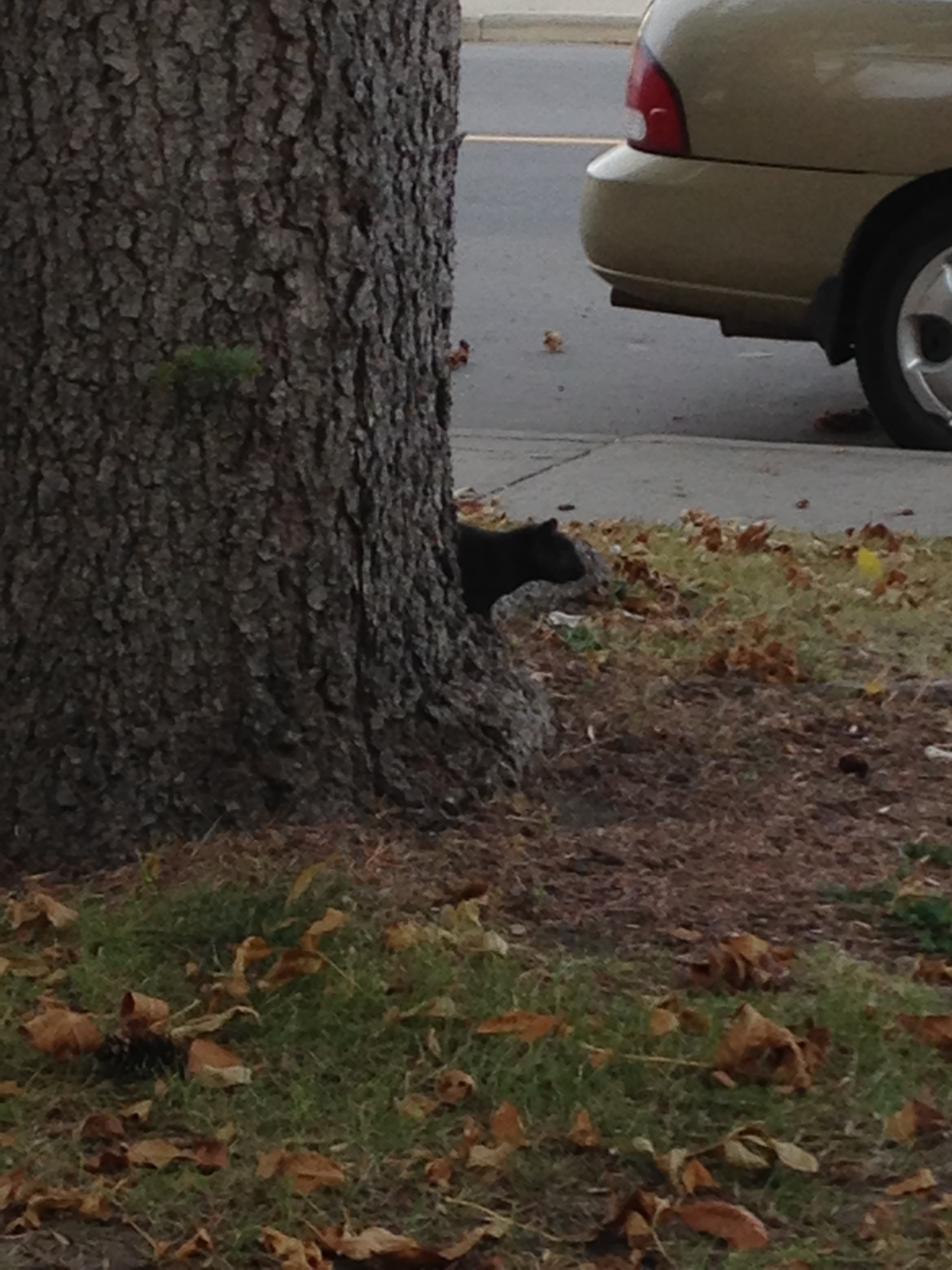 George the Curious and Intelligent Squirrel