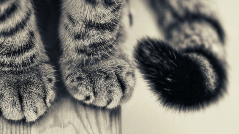 cat-paws-banner