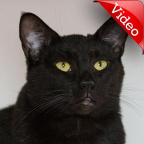 http://www.meowfoundation.com/adopt/4574/shirlee/