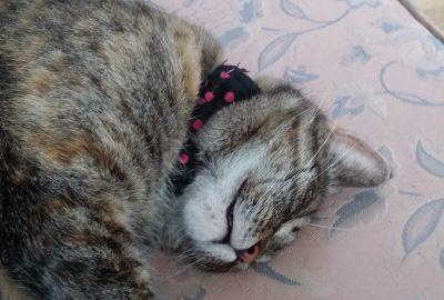 Happy kitty, purr purr purr