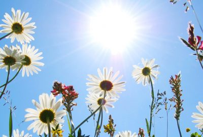 Image: http://colorfully.eu/sun-and-flowers-facebook-cover/