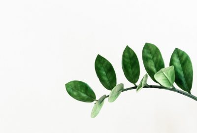 Plant Symbolism (Image: https://unsplash.com/search/photos/plant)