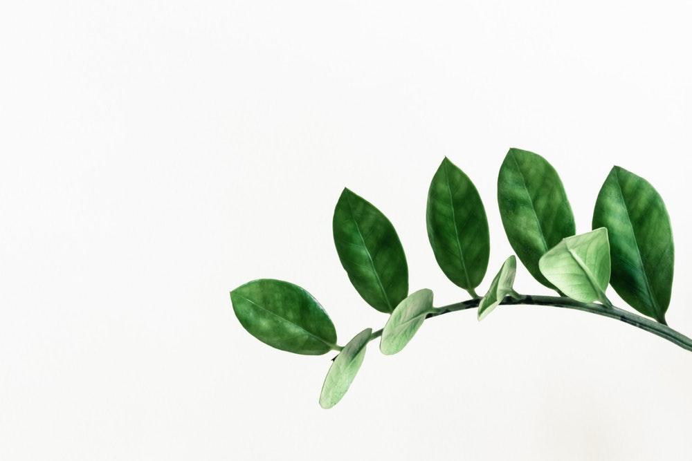 Plant Symbolism (Image: https://unsplash.com/search/photos/plant)